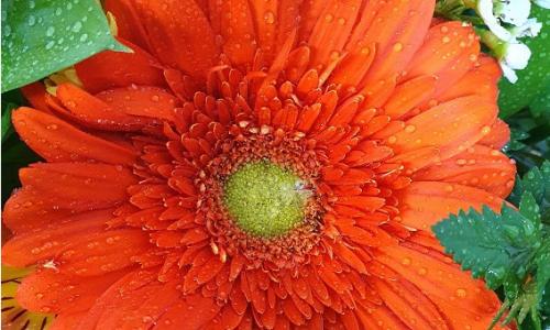 Flor de Nácar